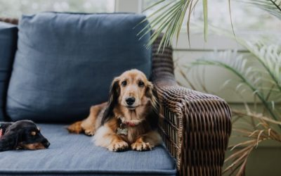 Our Top 6 Tips To Make Apartment Living Easier For Both You and Your Pooch