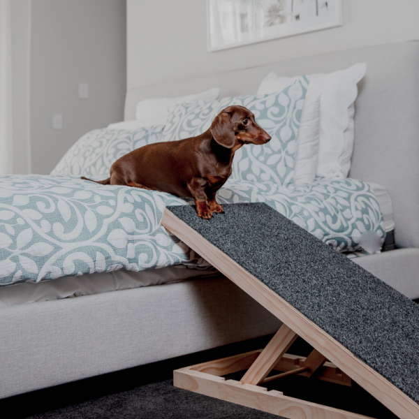 Height Adjustable Dachshund Dog Ramp (Australian Made)