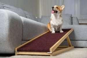 pet ramp, dog ramp for car