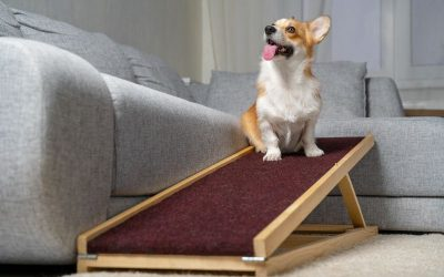 How To Teach Your Dog To Use A Dog Ramp