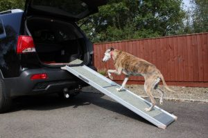 dog ramp or dog steps - how to choose with the Dog Ramp Co