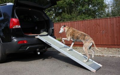How to Choose The Perfect Dog Ramp or Step for You and Your Pooch