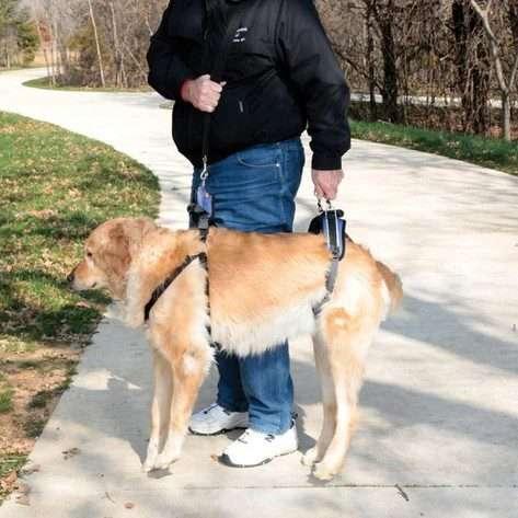Solvit by PetSafe CareLift Full Body Harness for Older/ Injured/ Invalid Dogs (Large) - The Dog Ramp Co. Australia
