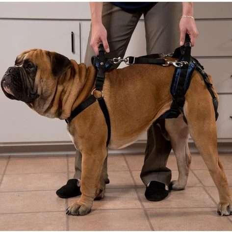 Solvit by PetSafe CareLift Full Body Harness for Older/ Injured/ Invalid Dogs (Medium) - The Dog Ramp Co. Australia