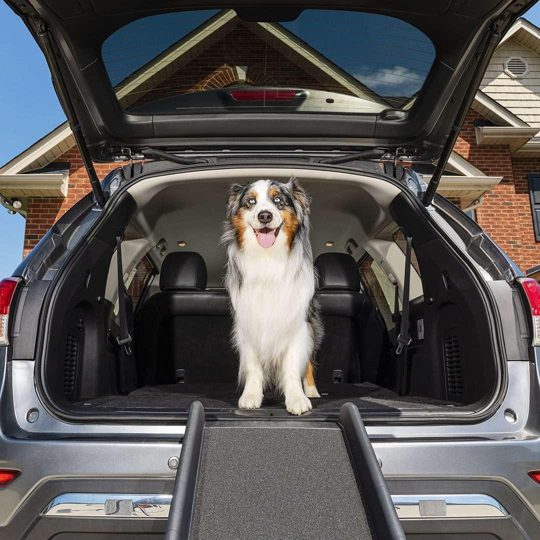 Solvit by PetSafe UltraLite Bi-Fold Car Pet Ramp Suitable For Dogs Up To 90kg - The Dog Ramp Co. Australia