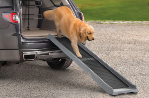 The Dog Ramp Co. Golden Retriever using a ramp out of the car