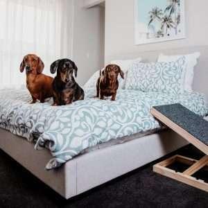 Height Adjustable Dachshund Dog Ramp (Australian Made)